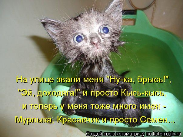 kotomatritsa_2E (604x453, 251Kb)