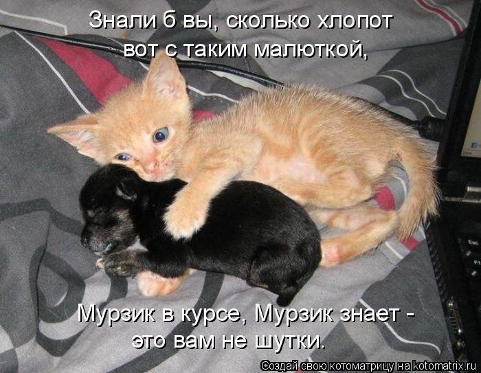 kotomatritsa_K (700x543, 239Kb)