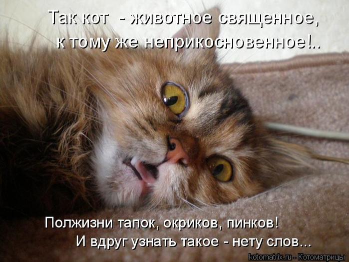 kotomatritsa_s (700x524, 356Kb)