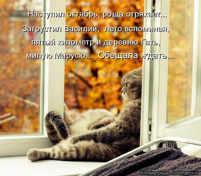 kotomatritsa_zA (700x615, 368Kb)