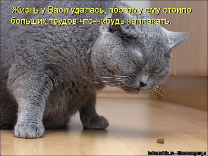 kotomatritsa__B (700x527, 342Kb)