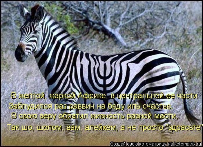 kotomatritsa_3N (700x509, 376Kb)