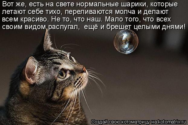 kotomatritsa_c (622x414, 164Kb)