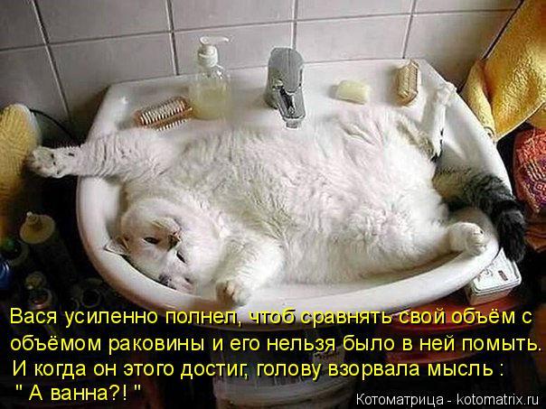 kotomatritsa_Y (604x453, 250Kb)