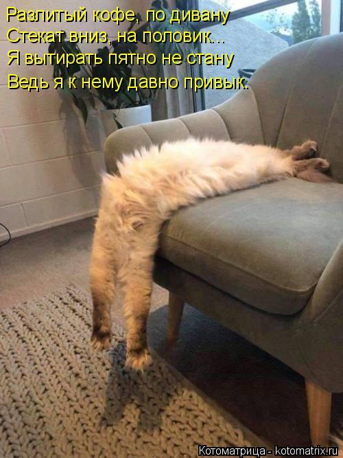 kotomatritsa_B (500x667, 244Kb)