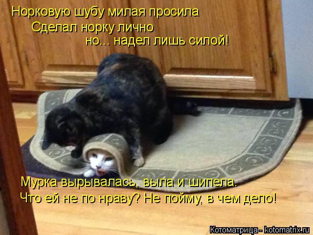 kotomatritsa_BR (640x480, 241Kb)