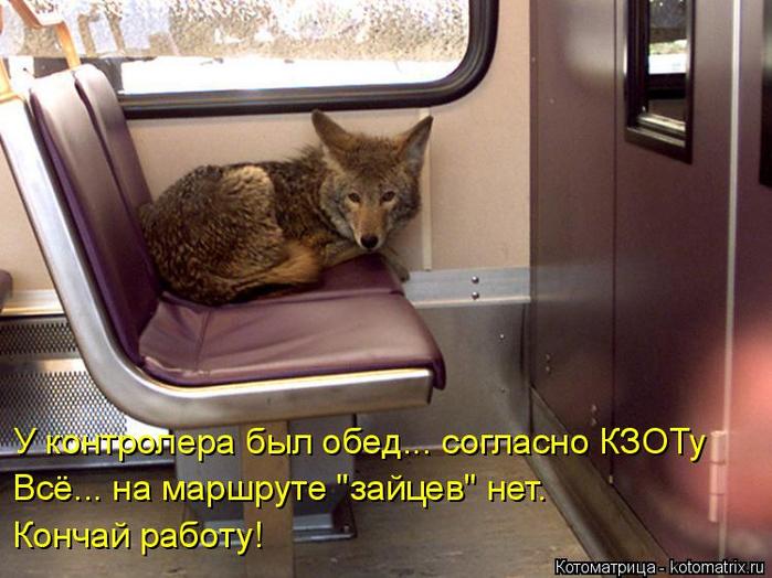 kotomatritsa_ca (700x524, 375Kb)