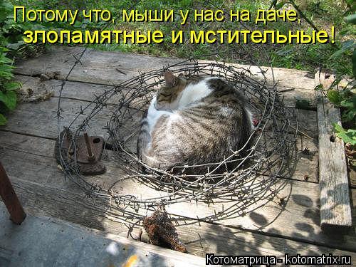 kotomatritsa_h (1) (500x375, 206Kb)