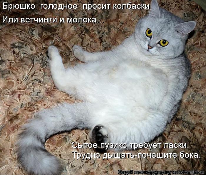 kotomatritsa_6 (700x596, 464Kb)