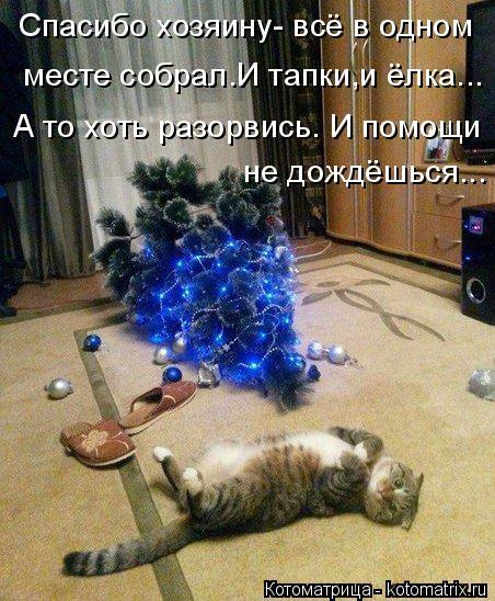 kotomatritsa_aZ (452x548, 274Kb)