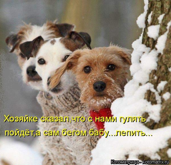 kotomatritsa_D (600x581, 271Kb)
