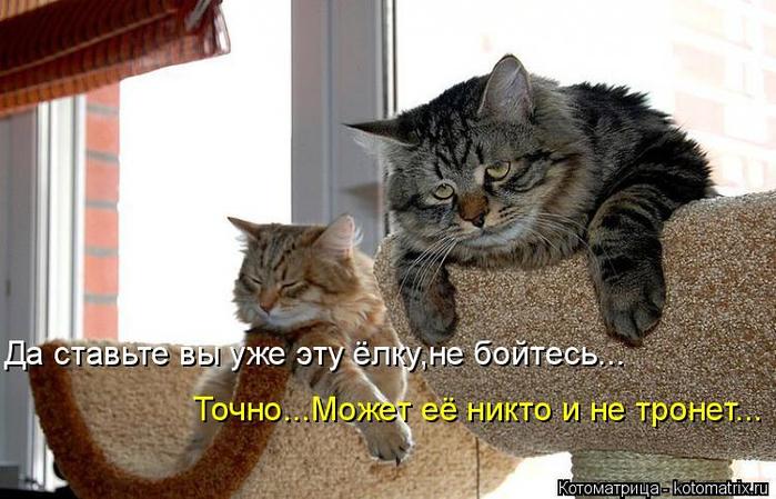 kotomatritsa_y (700x449, 308Kb)