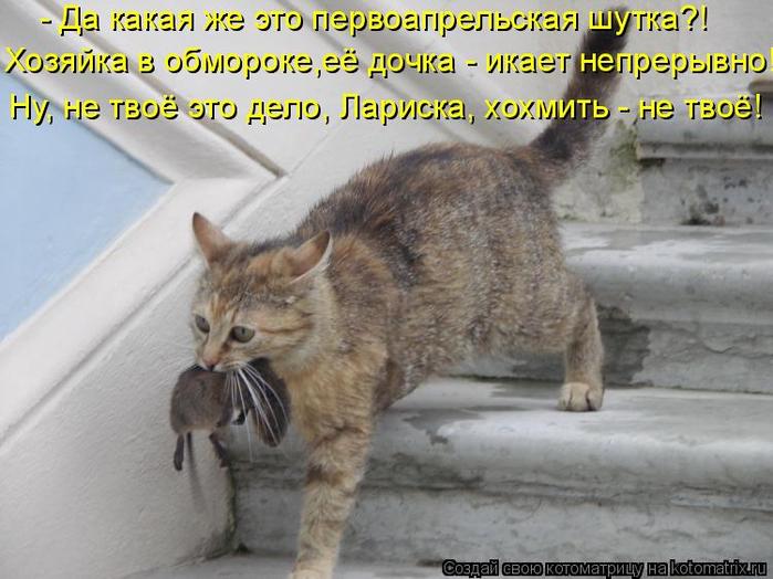 kotomatritsa_h (700x524, 343Kb)