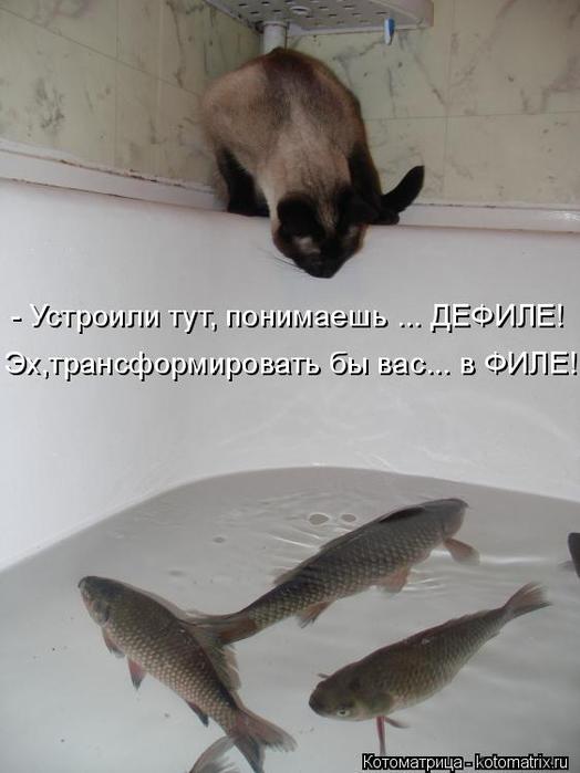 kotomatritsa_p (1) (524x700, 197Kb)