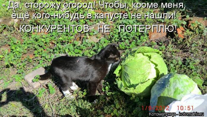 kotomatritsa_q (1) (700x393, 436Kb)