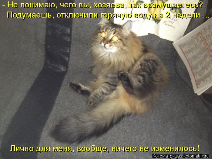 kotomatritsa_QX (700x524, 341Kb)