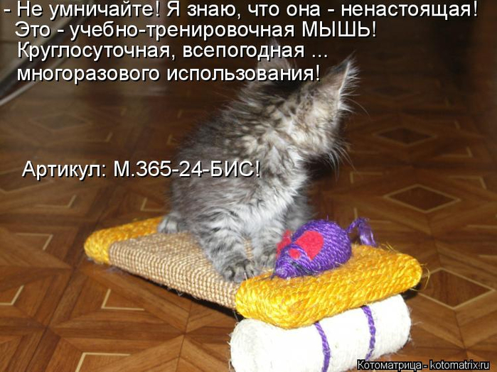 kotomatritsa_T (2) (700x524, 371Kb)