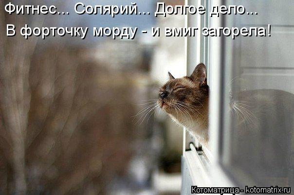 kotomatritsa_0l (604x401, 148Kb)