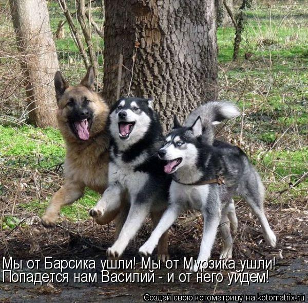 kotomatritsa_Ch (600x589, 324Kb)