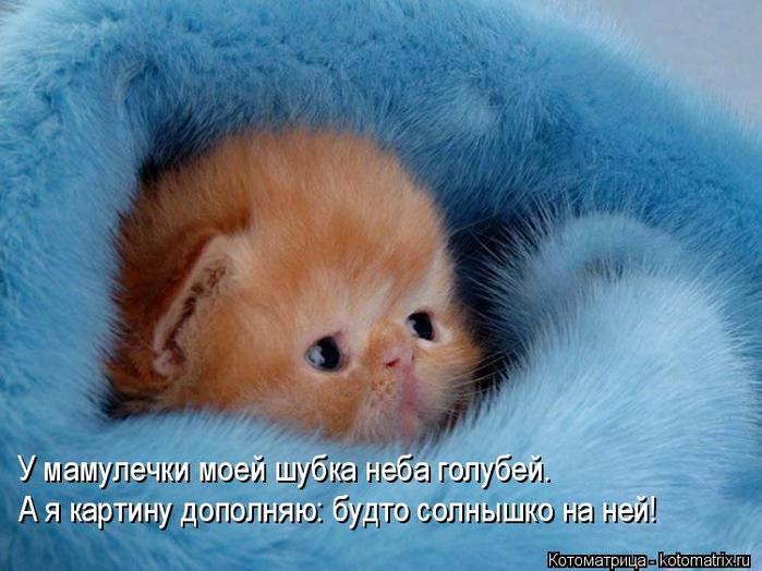 kotomatritsa_h (700x524, 369Kb)