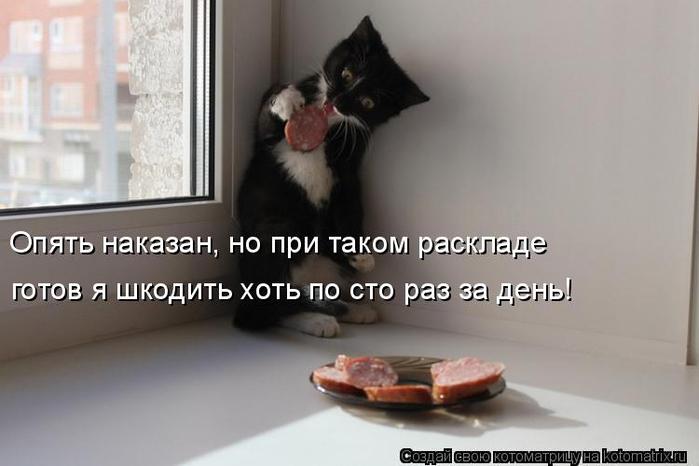 kotomatritsa_S (700x466, 191Kb)