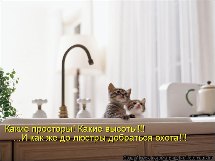 kotomatritsa_VB (700x524, 230Kb)