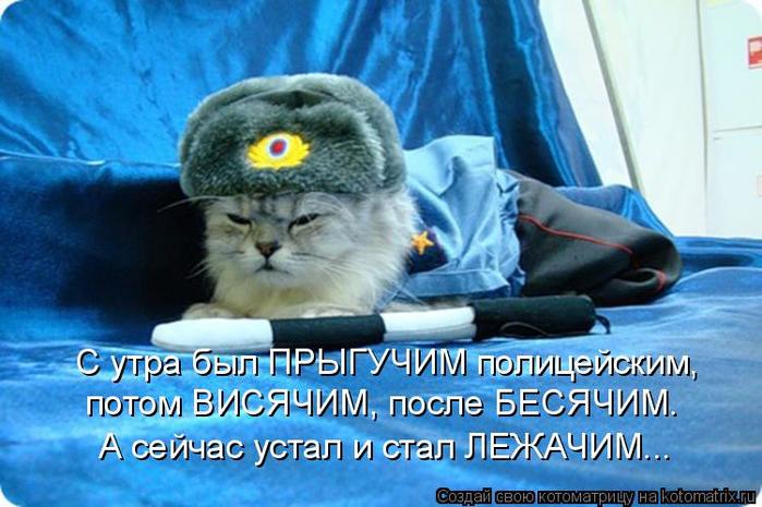 kotomatritsa_6 (700x465, 375Kb)