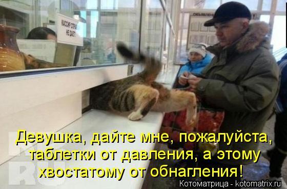 kotomatritsa_Ig (560x368, 178Kb)