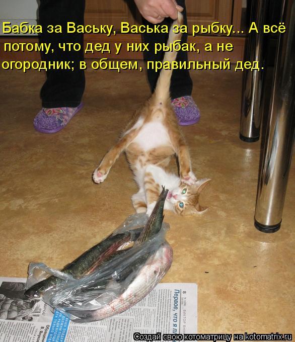 kotomatritsa_9 (586x680, 302Kb)