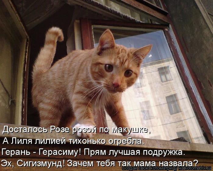 kotomatritsa_b (700x563, 438Kb)