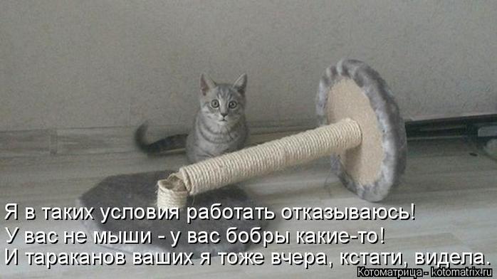 kotomatritsa_F (700x392, 204Kb)