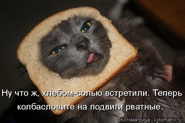 kotomatritsa_r0 (604x403, 158Kb)