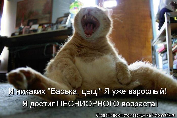 kotomatritsa_TS (700x467, 225Kb)