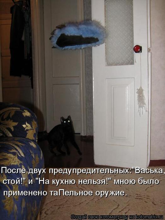 kotomatritsa_Z (524x700, 284Kb)