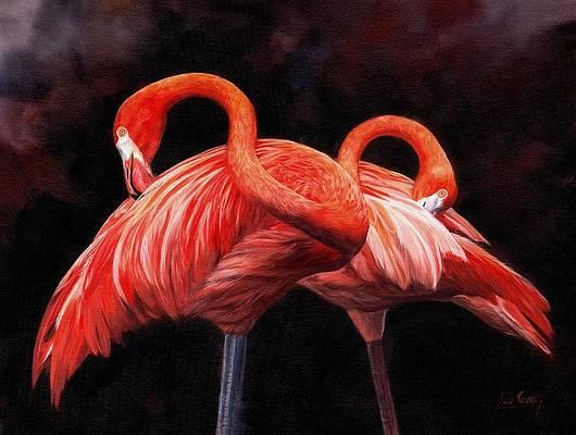 pretty-in-pink-david-stribbling (530x400, 161Kb)