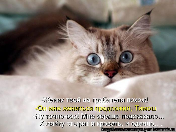 kotomatritsa_HW (700x524, 290Kb)
