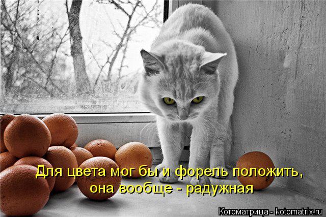 kotomatritsa_na (640x427, 190Kb)