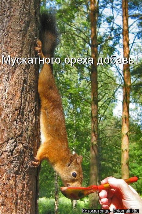 kotomatritsa_aW (465x700, 453Kb)