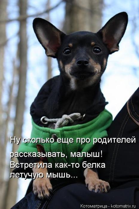 kotomatritsa_RT (465x700, 279Kb)