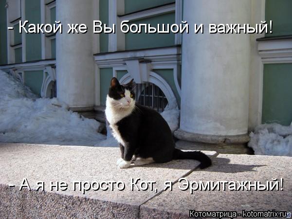 kotomatritsa_TQ (600x450, 168Kb)