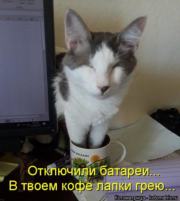 kotomatritsa_8J (582x650, 244Kb)