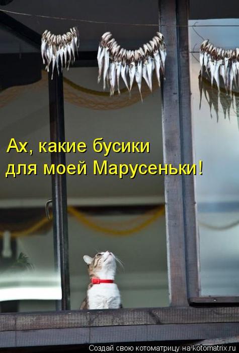 kotomatritsa_A (475x700, 270Kb)