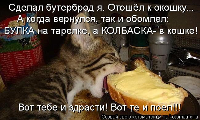 kotomatritsa_cX (650x393, 221Kb)