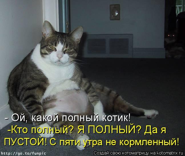 kotomatritsa_Rn (648x546, 196Kb)
