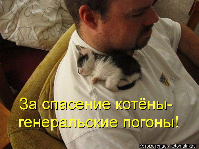 kotomatritsa_z (700x525, 276Kb)