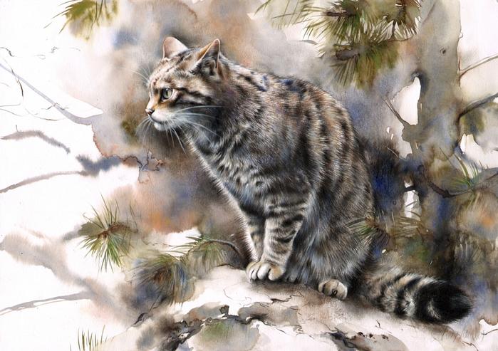 scottishwildcat (700x493, 427Kb)