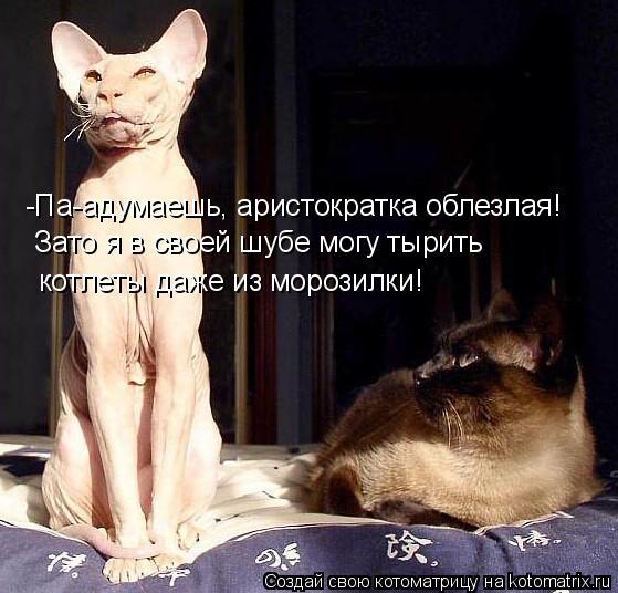 kotomatritsa_5 (559x536, 198Kb)