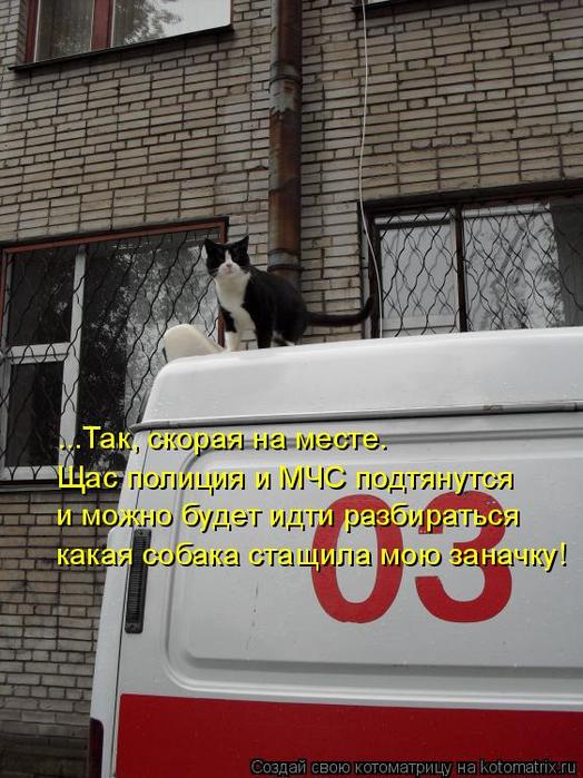 kotomatritsa_9M (524x700, 370Kb)