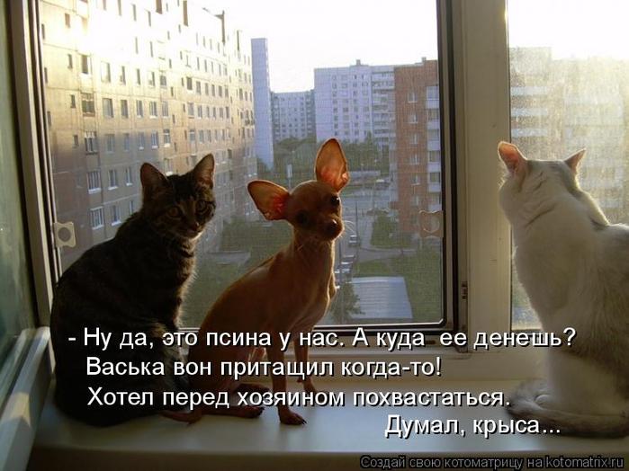 kotomatritsa_a4 (700x524, 332Kb)