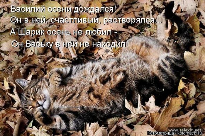 kotomatritsa_c (700x464, 437Kb)